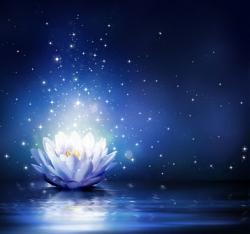 Blue Lotus Fragrance Oil 18036